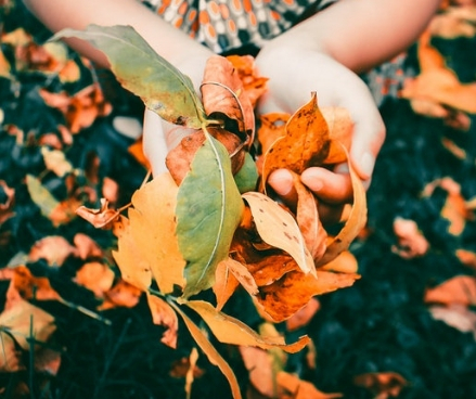 Your Autumn garden tidy-up
