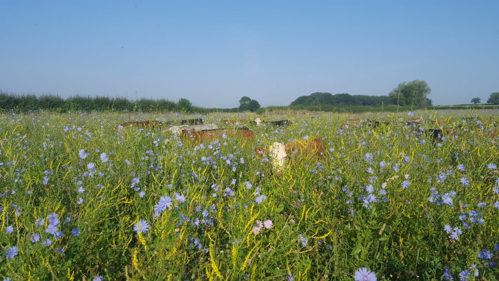 How can we transfer regenerative farming practices into our gardens?