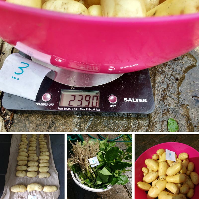 Improving Potato Crop Yield – Test Results