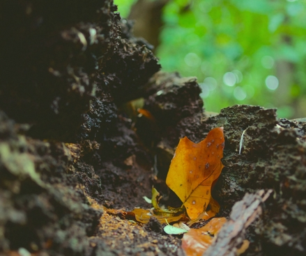 The big Autumn clear up – your next compost heap