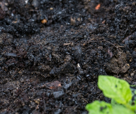 How to make best use of your compost