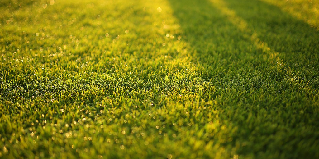 Autumn lawncare for healthy turf next spring